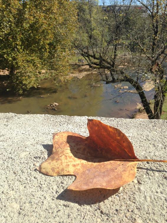 amys empowered post leaf on bridge